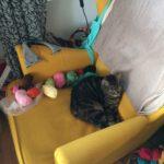 Katt och garn